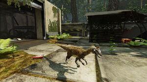 Cryolophosaurus pic 1