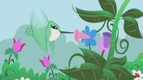 File:Hummingbird.jpg
