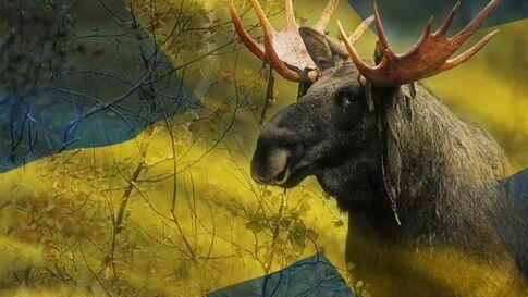 UserNFSKutski moose