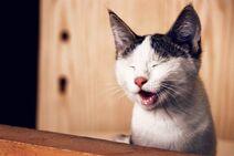 Cassius the comedy cat