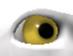 YellowEye-0