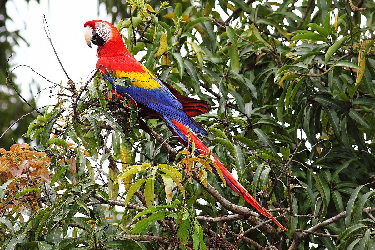 Scarlet Macaw | Nickelodeon Animals Wiki | Fandom