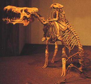 SqueletteEntelodon