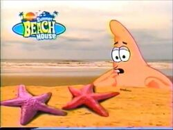 Patrick sees real starfish