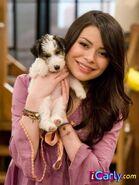 Carly-Shay