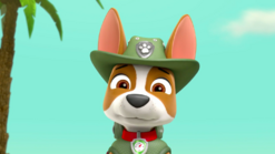 PAW Patrol Tracker the Jungle Pup Scared