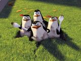 Die Pinguine aus Madagascar (Charakter)