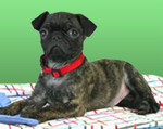 Nick Jr. Puppies Reggie Image