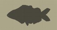 Oil Sardine
