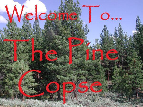 Pine Corpse