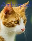 Amberpool