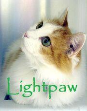 Lightpaw