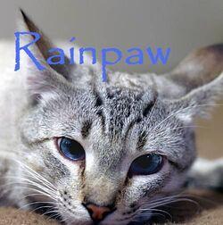 Rainpaw
