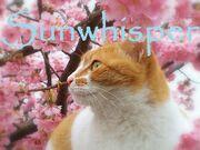 Sunwhisper
