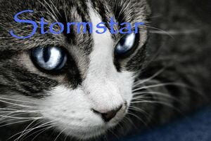 Stormstar