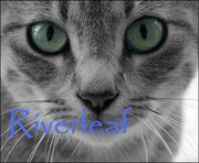 Riverleaf