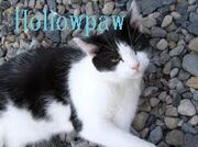 Hollowpaw
