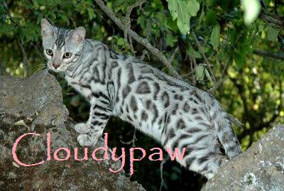 Cloudypaw