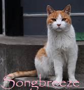 Songbreeze