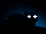 Небесная кошка