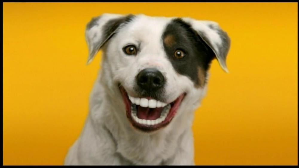 Image result for dog with dentures