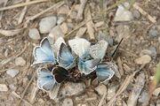 Moth group