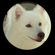 Charlotte (dog)