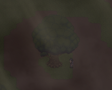 Location of Leaf