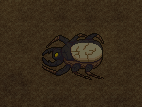 Big Scarabs