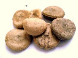 Strychnos-nux-vomica-seeds-cc0-1-0