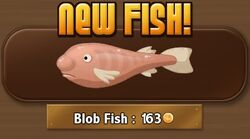 Blob Fish