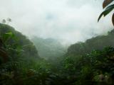Джунгли потерянных душ