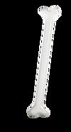 Silverbone