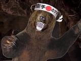 Awesome Karate Bears
