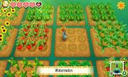 Story of Seasons screenshot 7