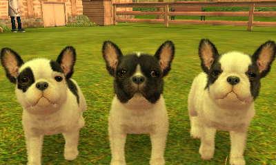French Bulldog Nintendogs Wiki Fandom Powered By Wikia