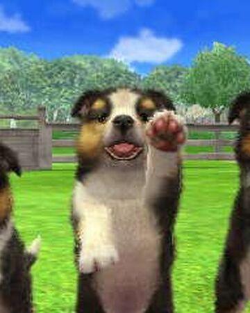Shetland Sheepdog Nintendogs Wiki Fandom