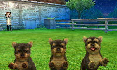 Yorkshire Terrier Nintendogs Wiki Fandom Powered By Wikia