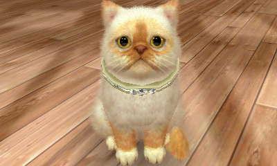 File:-Nintendogs Cats- Precious1.jpg