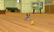 Nintendogs Cats 003