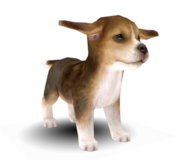 Nintendogs cats beagle by centrixe-dc5nbca