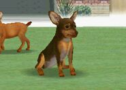 Nintendogs miniature pinscher