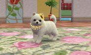 Nintendogs + Cats pictures for poster 045
