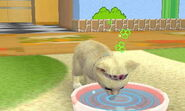 Nintendogs Cats;0 027