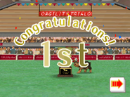 Agility trial open class win - dalmatians version