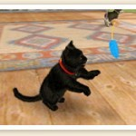 File:Playing with a cat (2).jpg