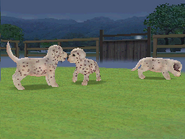 DalmFriendsDalmatianView