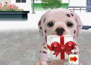 Dalmatian present