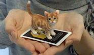 Ar cat