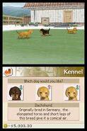 3 dachshunds